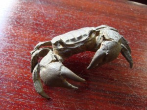 埼玉県久喜市にて蟹の彫刻をお売りいただきました